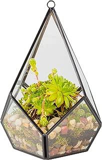 Best terrarium plants buy Reviews