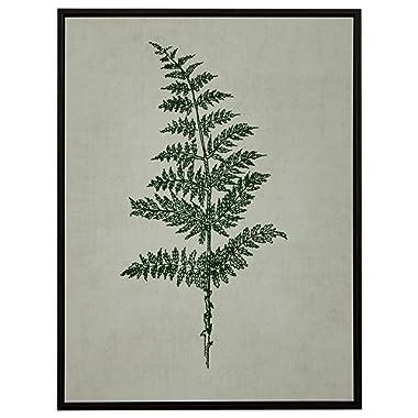 Amazon Brand – Stone & Beam Modern Print Wall Art of Green Fern, Espresso-Color Frame, 31.75  x 41.75