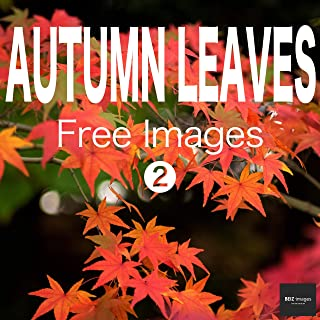 AUTUMN LEAVES Free Images 2  BEIZ images - Free Stock Photos (English Edition)