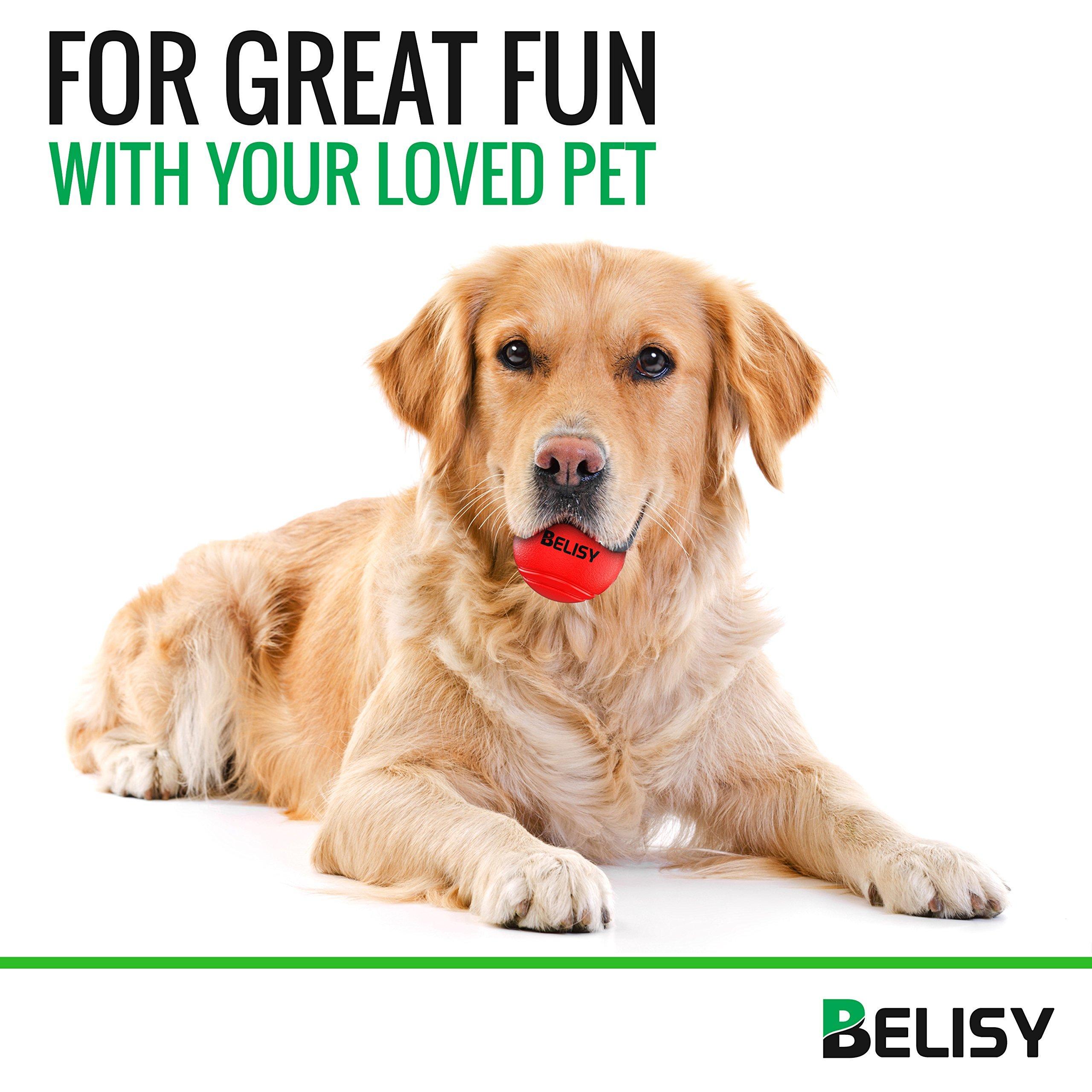 BELISY Pelota Perro - Juegos Para Perros - Adecuado Para Perros ...