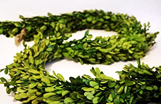 Preserved Boxwood Garland 6 ft. long by Tradingsmith
