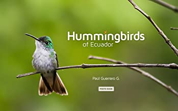 Hummingbirds of Ecuador