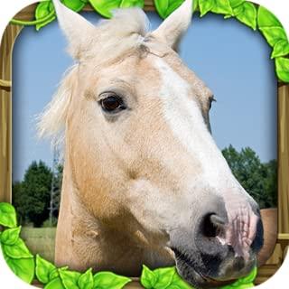 Best wild horse simulator games Reviews