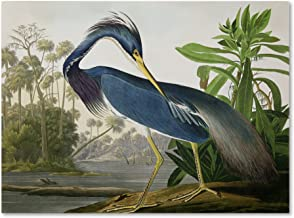 john audubon bird prints