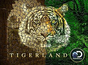 Tigerland Season 1