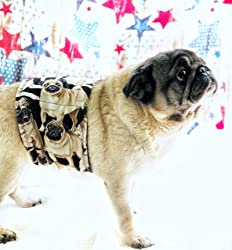 The Dog Belly Band Pug Washable Waterproof (MED 14-24 )