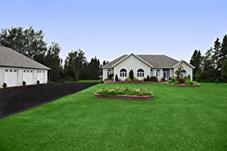 Best grass seed price per pound Reviews