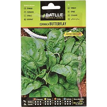 Semillas Hortícolas - Pepinillo Wisconsin SMR 18 - Batlle: Amazon ...
