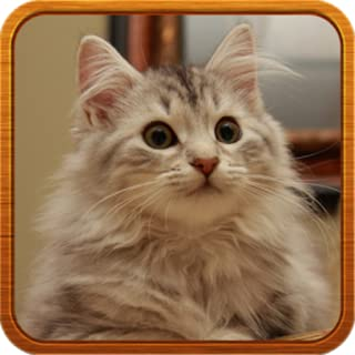 Best cat ringtones for android Reviews
