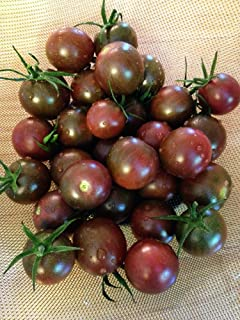 Chocolate Cherry Tomato Seeds - 150 Milligrams - GARDEN FRESH PACK!
