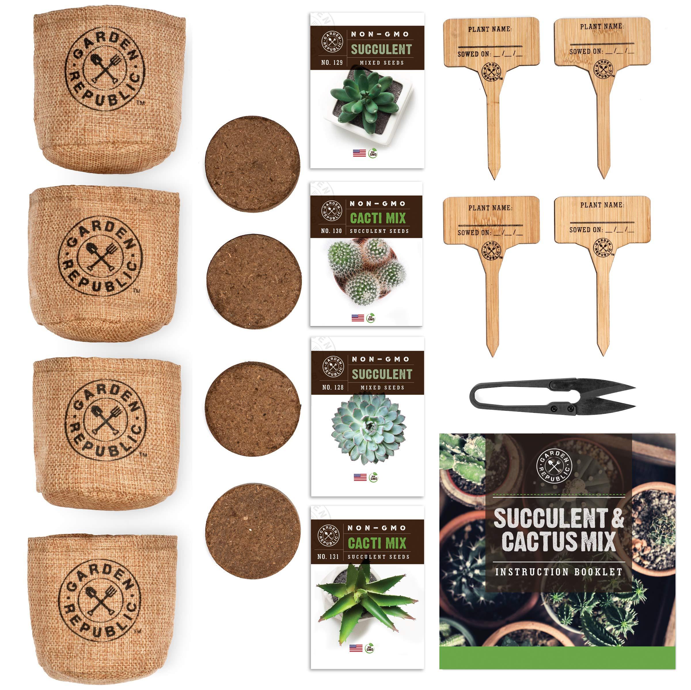 Cactus Kit de semillas de suculentas para principiantes – Kit de ...