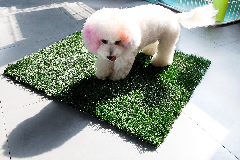 golden Moon Pet Grass Mat Series PE Artificial Turf Antibacterial Pet Potty Trainer Indoor Outdoor Replacement Pet Grass Mat, 32 x25