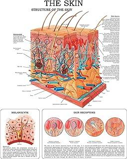 The Skin e-chart: Full illustrated