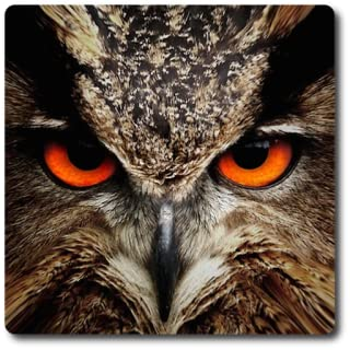 Owl Vision Camera Effect - Owl Night Vision