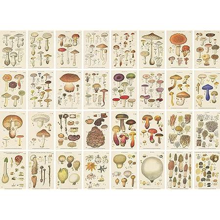 「キノコ図鑑」カード32枚 複製フランス1919年