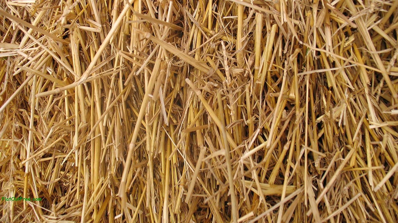 100 Percent Natural Wheat Straw 国内送料無料 lbs. 8 予約販売品
