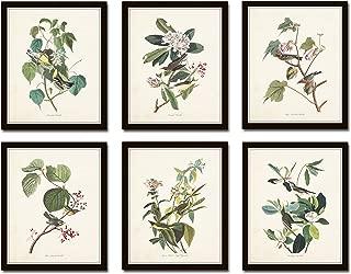 Audubon Birds Print Set No.24 Set of 6 Vintage Audubon Bird Prints - Unframed