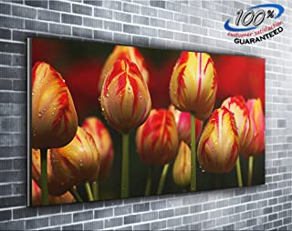Best panoramic flower pictures Reviews