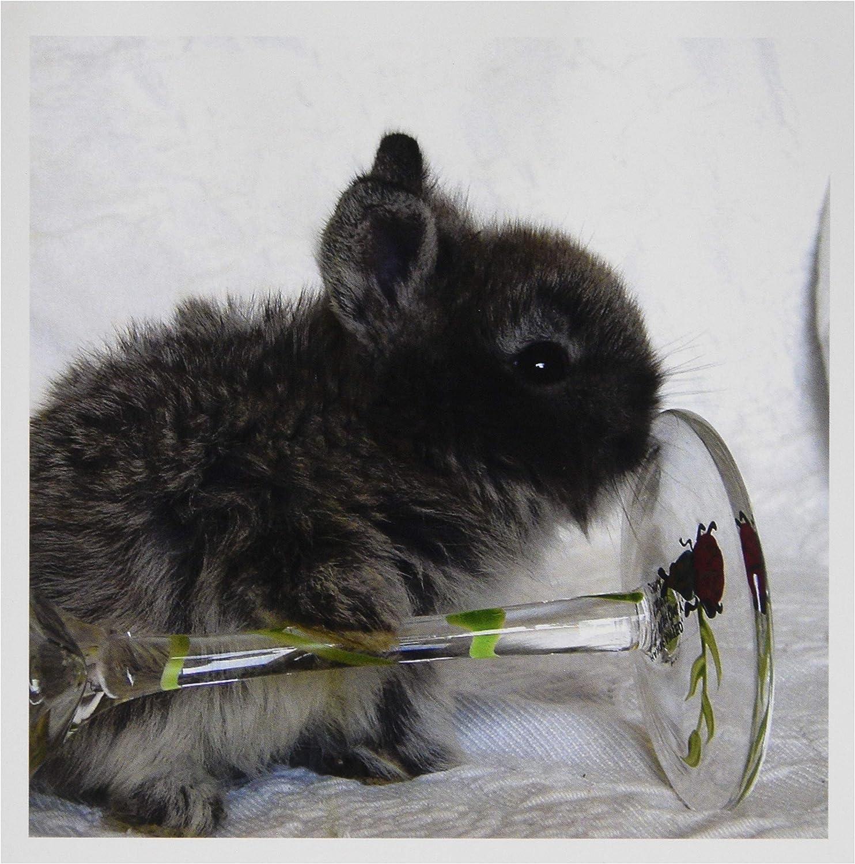 3dRosa Pflanzentopf Bunny und Wein Glas – Karten, 6 by Foto, 6 Stück (GC 6418 _ 1) B07B9ZTKQ5   Berühmter Laden