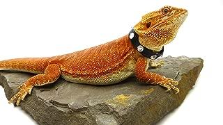 Carolina Designer Dragons Leather Reptile Collar; Limited Edition, 10mm Regaliz Leather with Swarovski Crystal Rhinestones