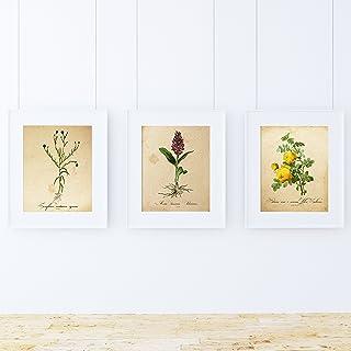 Pack de láminas Sense. Posters con imágenes de botánica.