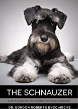 The Schnauzer: A vet's guide on how to care for your Schnauzer