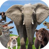 Animals Sound Effects and Ringtones for kids