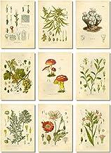 Ink Inc. Psychoactive Hallucinogenic Plants Botanical Drawings Vintage Art Prints, Set of 9, 5x7in, Unframed, Cannabis Coc...