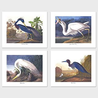 bird lithograph prints