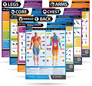Gym & Exercise Workout Posters | Anterior & Posterior...