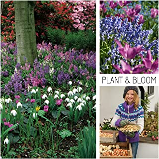 Plant & Bloom Flower Bulbs from Holland, 50 Bulbs - English Blue Bell, Snakeshead, Snowdrop, Narcissus Daffodil, Glory-of-The-Snow - Cottage Garden Woodland Garden Bags - Easy to Grow - Fall Planting
