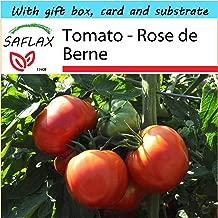 SAFLAX - Gift Set - Tomato - Rose de Berne - 10 seeds - Lycopersicon esculentum