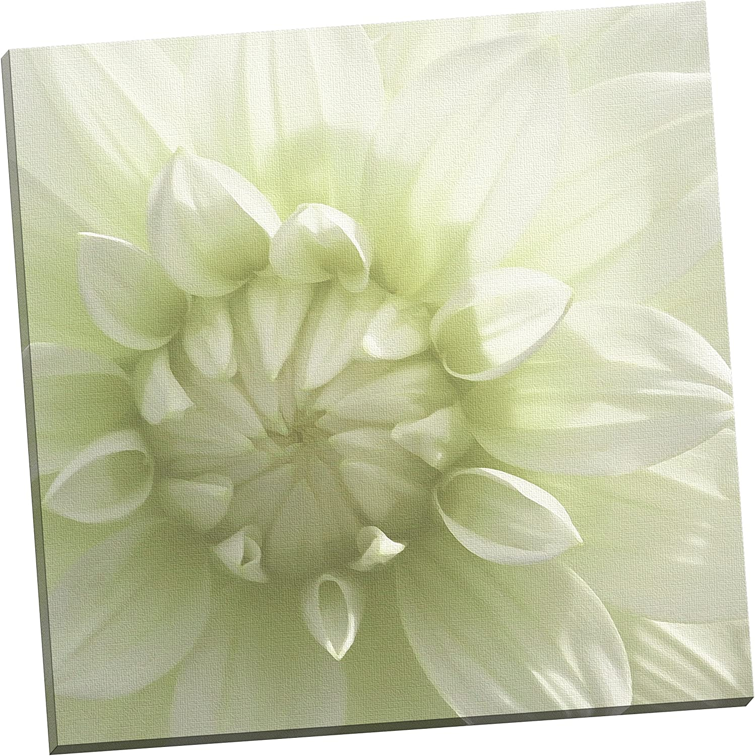 Portfolio Canvas Décor White Blossom III  by Mary Campanga Wrapped and Stretched Canvas Wall Art, 24 by 24Inch