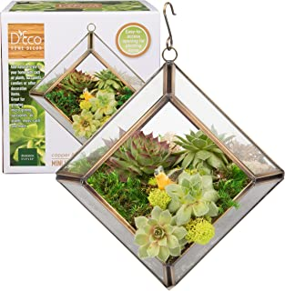 Best mini air plant terrarium Reviews