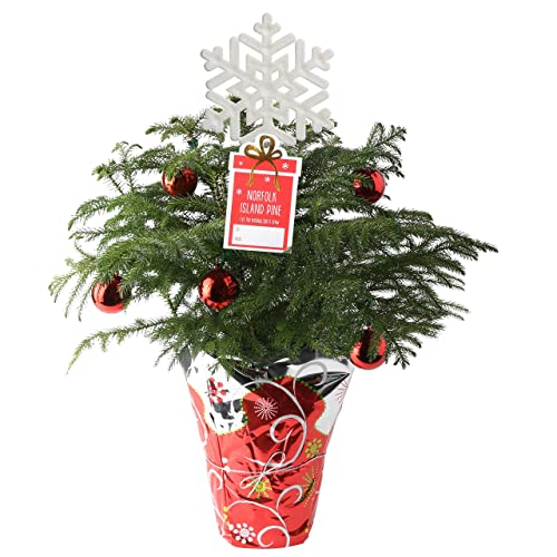 Christmas Plants Amazon Com