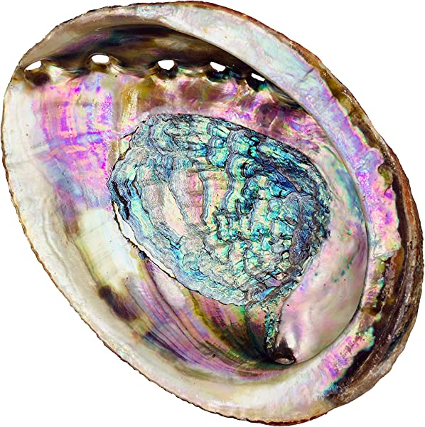 Alternative Imagination Standard Abalone Shell 5 Inches Or Larger Perfect For Holding Incense Trinkets And More