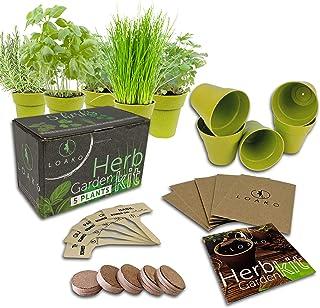 Indoor Herb Garden Starter Kit | 5 Non-GMO Herbs | Beginner Friendly | DIY Kitchen Herbs Growing Kit | Perfect Gift Idea |...