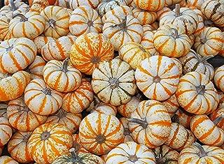 lil pumpkemon pumpkin