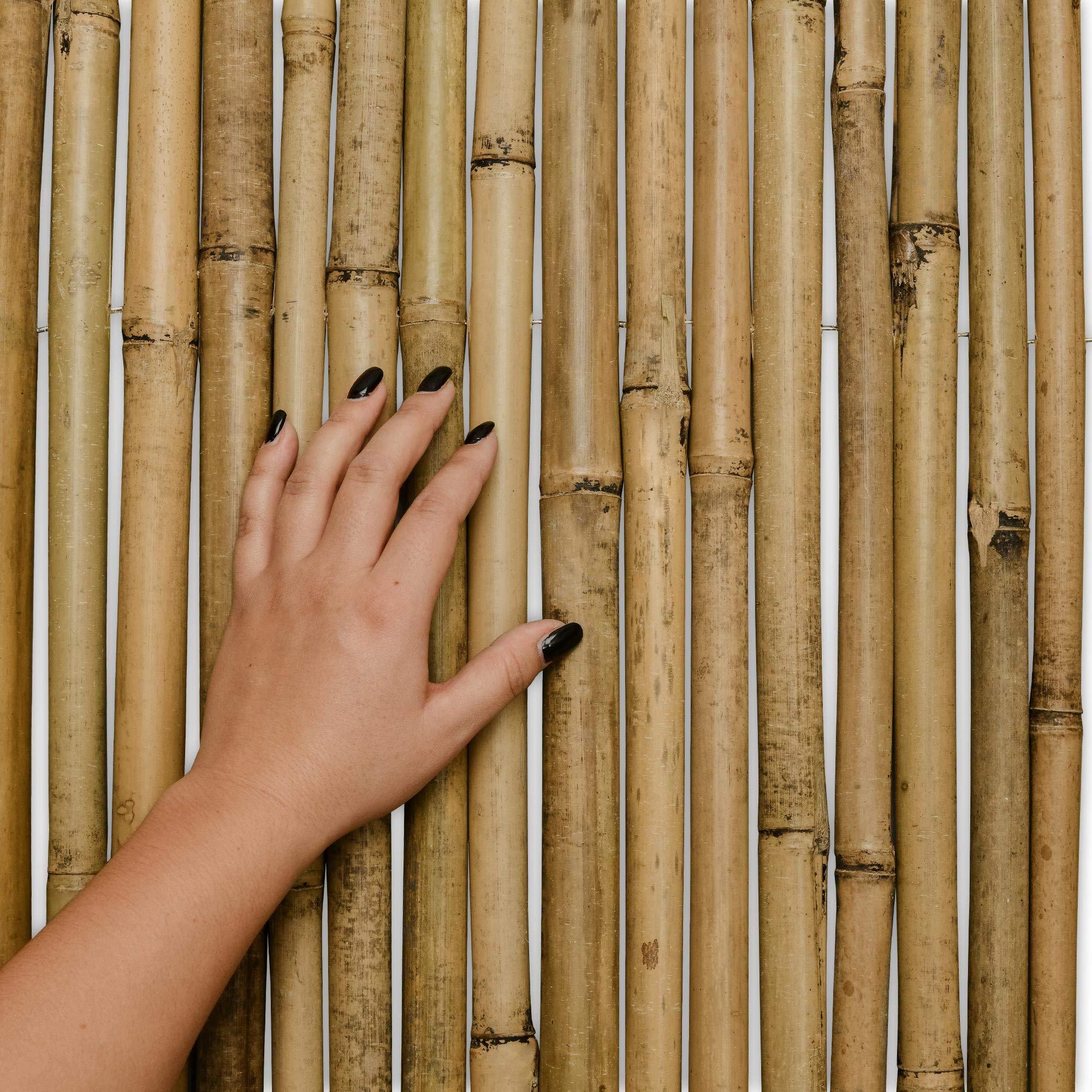 Sol Royal Valla de bambú Protectora SolVision B38 100 x 250 cm (A ...