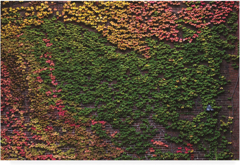 Trademark Fine Art Autumn Ivy