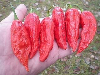 Bhut Jolokia Pepper 10 Seeds By Pepper Gardeners