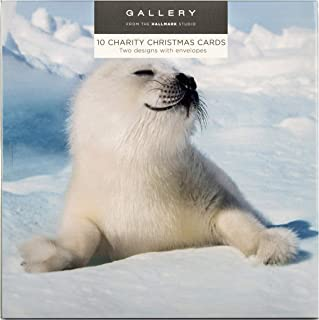 Polar Animals Boxed Christmas Cards from Hallmark - 10 Cards in 2 Photographic Designs