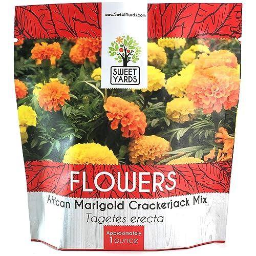 Marigold Plant Amazon Com
