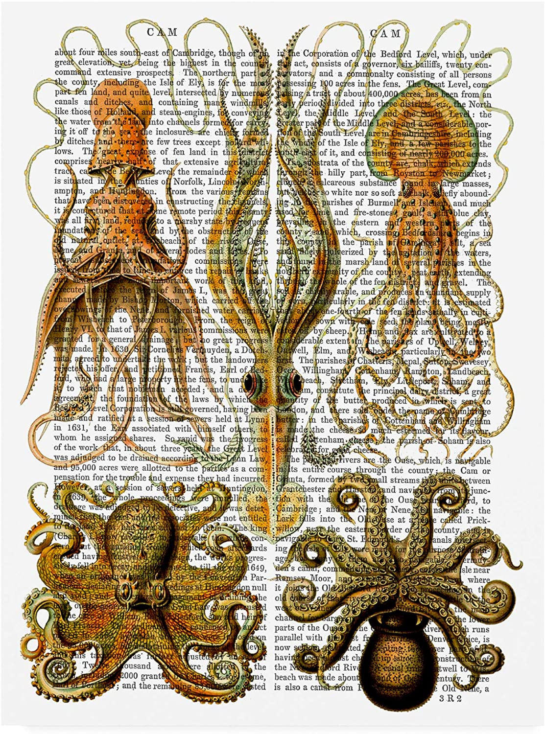 Trademark Fine Art Octopus and Squid by Fab Funky, 14x19