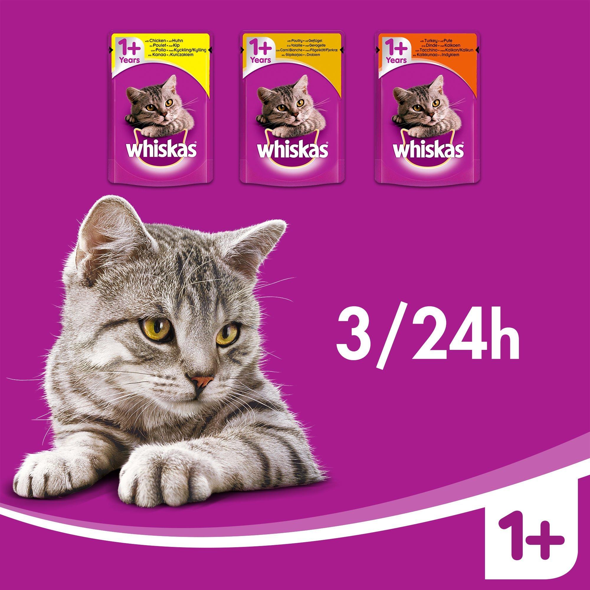 Whiskas - Bolsas de comida húmeda, deliciosa y sabrosa selección de aves en gelatina, adecuada para gatos de 1 a 1 años, mega paquete de 120 x 100 g: Amazon.es: Productos para mascotas