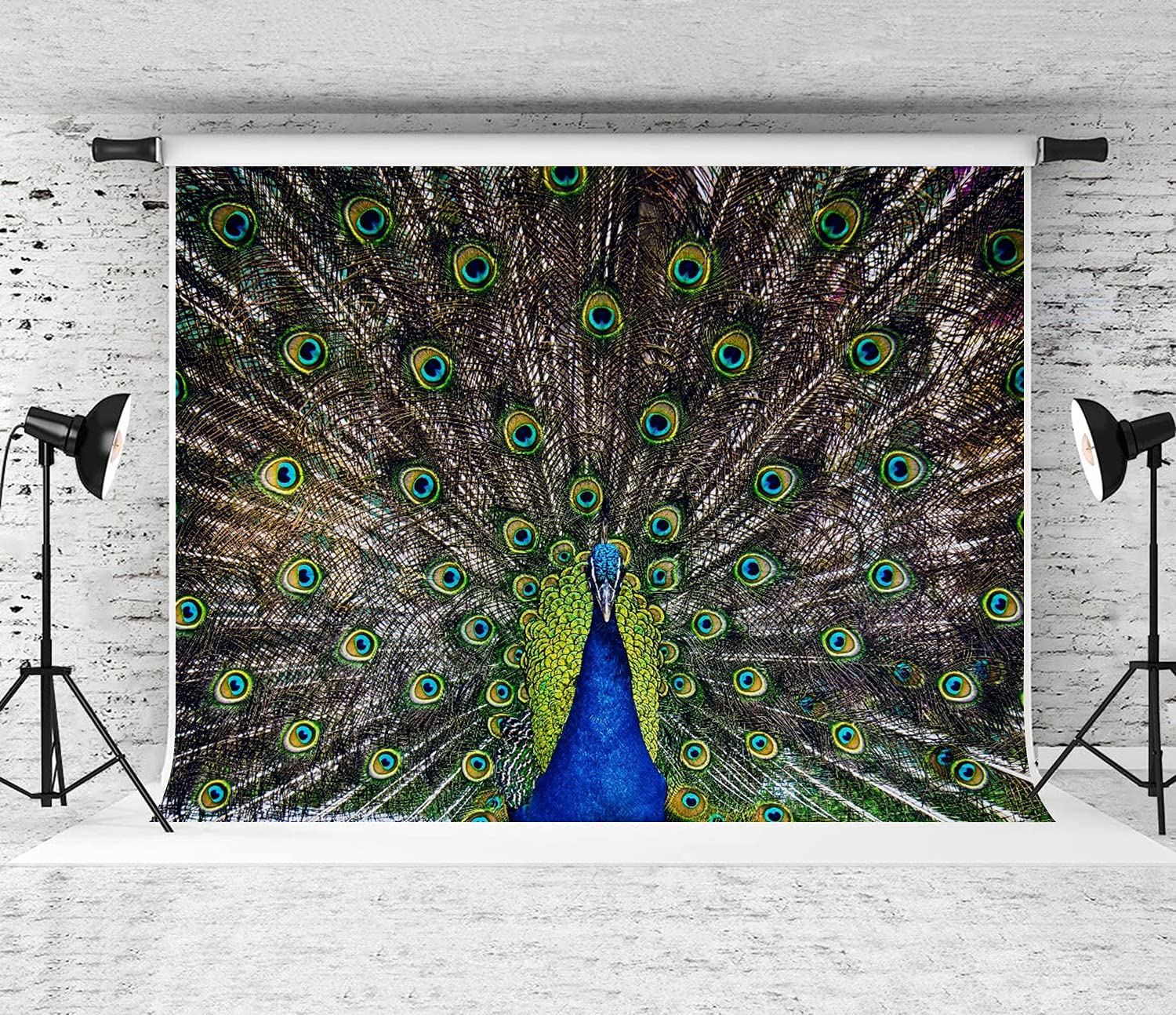 ZOANEN Photography Background Adult Luxury 25% OFF displaying Peacock Male Colo