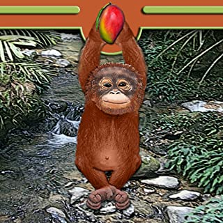 Orangutan of the Jungle