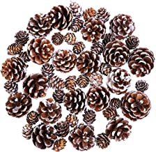Cooraby Christmas Pine Cones Natural Snow 4-6 cm Pine Cones 2-3 cm Mini Pine Cones for Thanksgiving Decoration, Fall and C...
