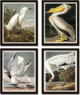 Audubon Sea Birds Print Set No. 5 Set of 4 Vintage Audubon Bird Prints - Unframed