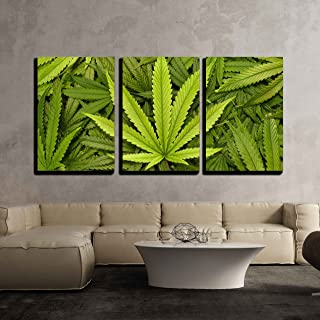 wall26 3 Piece Canvas Wall Art - Big Marijuana Leaf Close Up with Texture Background of Cannabis Leaves - Modern Home Decor Stretched and Framed Ready to Hang - 24